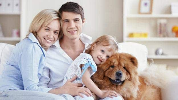 Wills & Trusts dog-young-family Direct Wills Smethwick